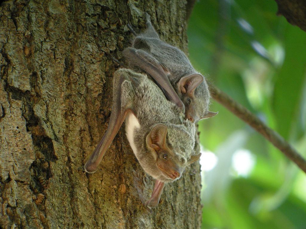 Découvrez les secrets des chauves-souris à la Maison de la réserve Nyer © Frank.Vassen via Visualhunt.com