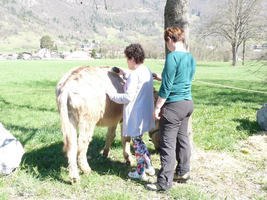 Les participants apprennent à prendre soin des ânes.